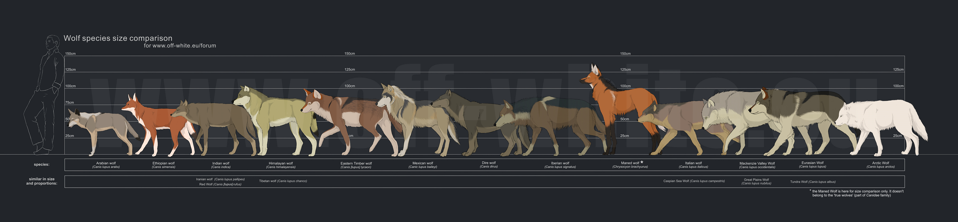 wolf_species_size_comparison_by_tanathe