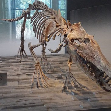 When Whales Walked: The Evolution of Cetaceans