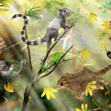 Ancient squirrel-like creatures push back mammal evolution