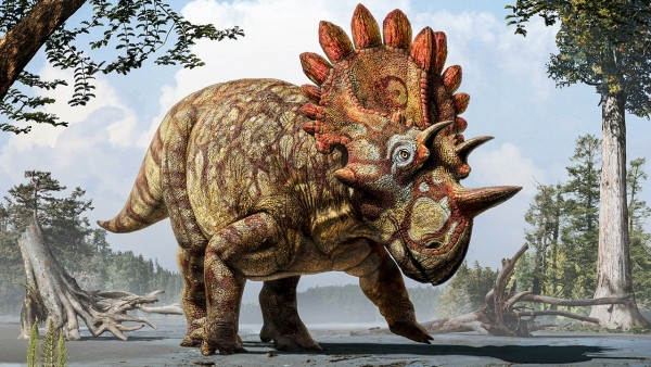'Hellboy' dino was a close relative of Triceratops