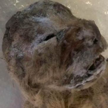 10,000-year-old lion cubs found in cave